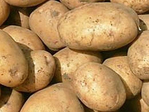 лучшие сорта картофеля с описанием для разных регионов, никулинский