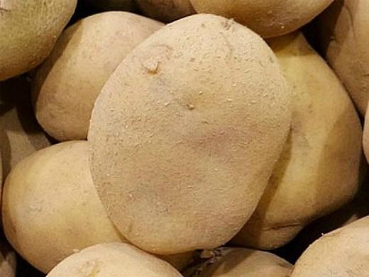 лучшие сорта картофеля с описанием для разных регионов, бронницкий