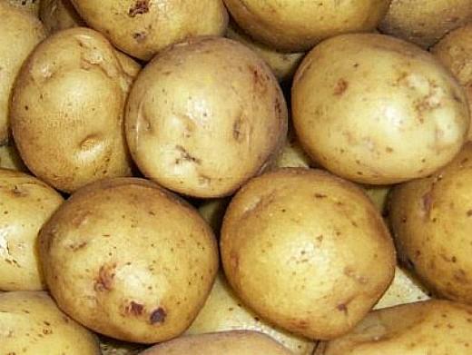 лучшие сорта картофеля с описанием для разных регионов, здабытак