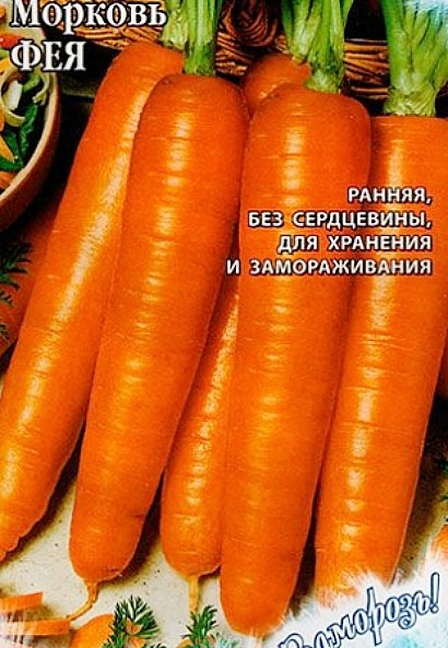 лучшие сорта моркови для открытого грунта, с описанием - фея