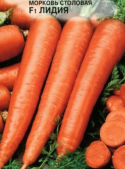 лучшие сорта моркови для открытого грунта, с описанием - лидия f1