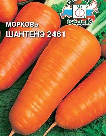 лучшие сорта моркови для открытого грунта, с описанием - шантенэ 2461