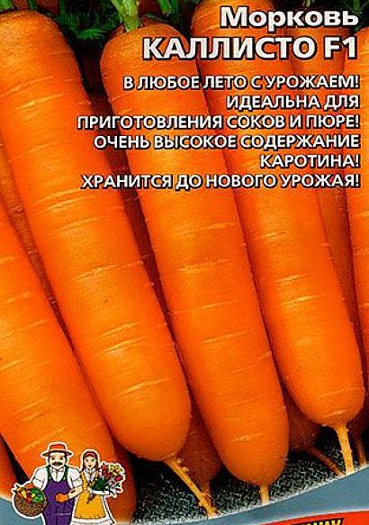 лучшие сорта моркови для открытого грунта, с описанием - каллисто f1