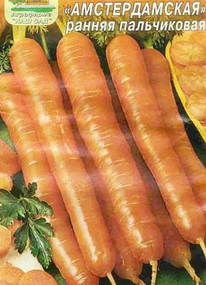 лучшие сорта моркови для открытого грунта, с описанием - амстердамская