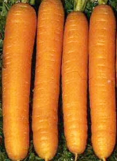 лучшие сорта моркови для открытого грунта, с описанием, бирючекутская 415