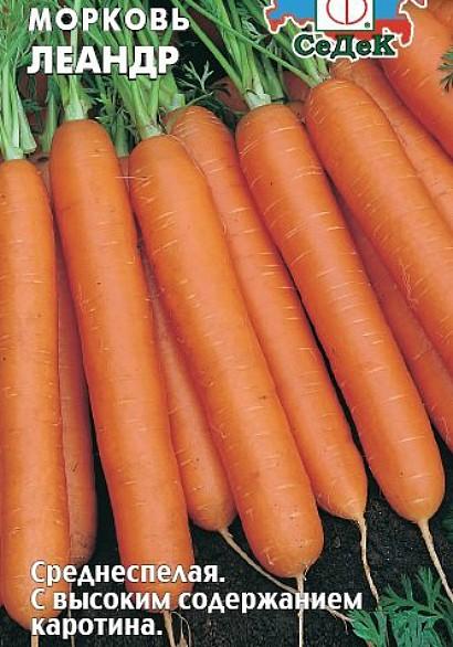 лучшие сорта моркови для открытого грунта, с описанием - леандр