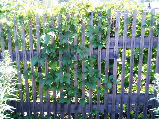 опоры для вьющихся растений и цветов 1-3