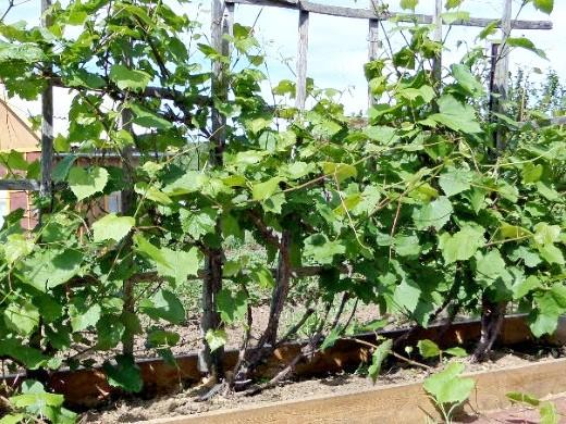 опоры для вьющихся растений и цветов 1-6