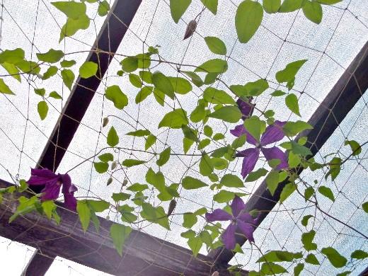 опоры для вьющихся растений и цветов 1-8