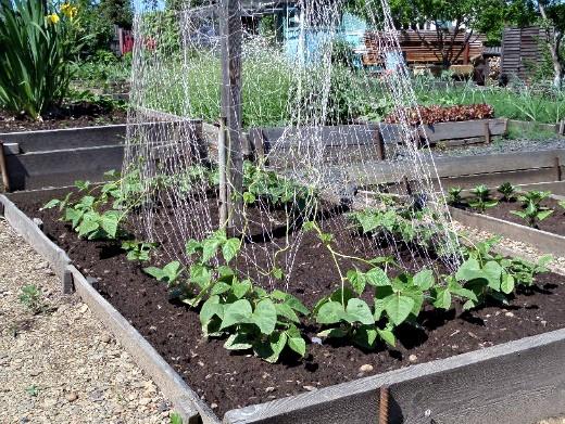 опоры для вьющихся растений и цветов 1-9