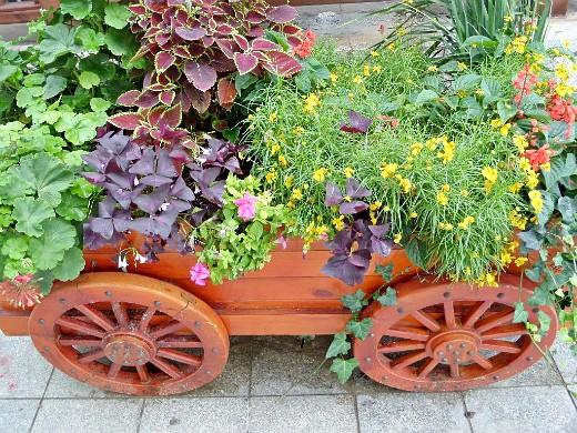 цветы для клумбы, цветущие всё лето - ландшафтный дизайн на даче