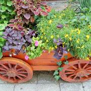 цветы для клумбы, цветущие всё лето 1-2