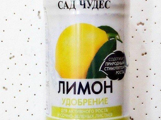 как вырастить лимон из косточек в домашних условиях 8