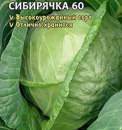 лучшие сорта капусты с названием, фото и описанием - сибирячка 60