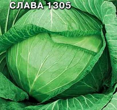 лучшие сорта капусты с названием, фото и описанием - слава 1305