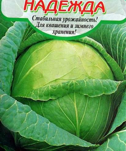 лучшие сорта капусты с названием, фото и описанием - надежда
