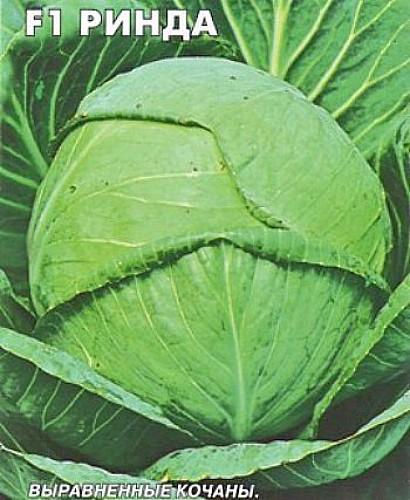 лучшие сорта капусты с названием, фото и описанием - ринда f1