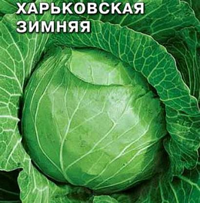 лучшие сорта капусты с названием, фото и описанием - харьковская зимняя