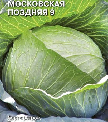 лучшие сорта капусты с названием, фото и описанием - московская поздняя 9