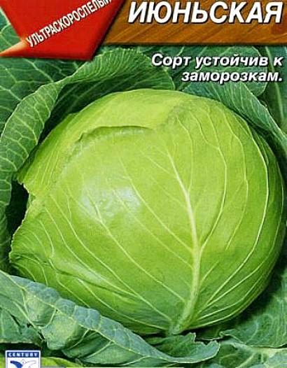 лучшие сорта капусты с названием, фото и описанием - июньская