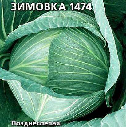 лучшие сорта капусты с названием, фото и описанием - зимовка 1474