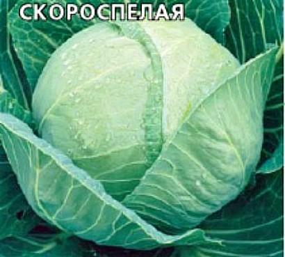 лучшие сорта капусты с названием, фото и описанием - скороспелая