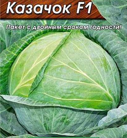 лучшие сорта капусты с названием, фото и описанием - казачок f1