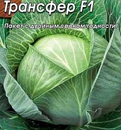 лучшие сорта капусты с названием, фото и описанием - трансфер f1