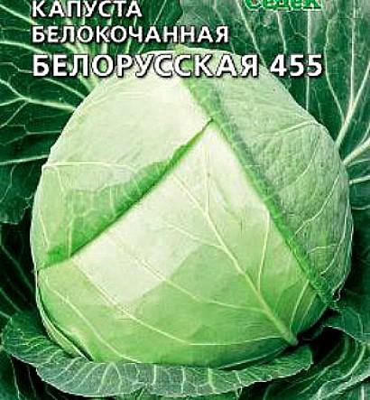 лучшие сорта капусты с названием, фото и описанием - белорусская 455