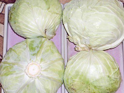 лучшие сорта капусты с названием, фото и описанием - урожай