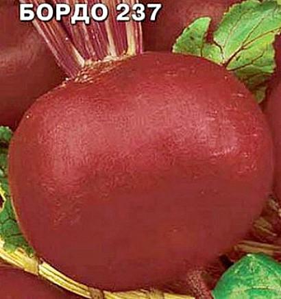 сорта свеклы лучшие, с описанием и фото - семена бордо 237