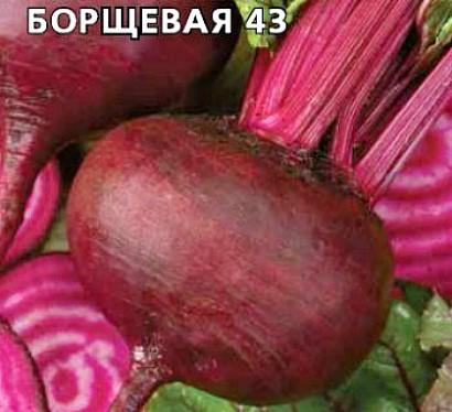 сорта свеклы лучшие, с описанием и фото - семена кубанская борщевая 43