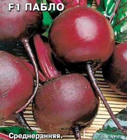сорта свеклы лучшие, с описанием и фото - семена пабло f1