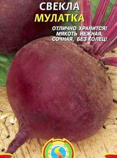 сорта свеклы лучшие, с описанием и фото - семена мулатка