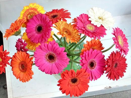 герберы, фото цветов в теплице - красивый букет