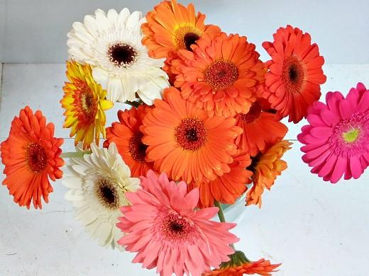 герберы фото цветов - букет