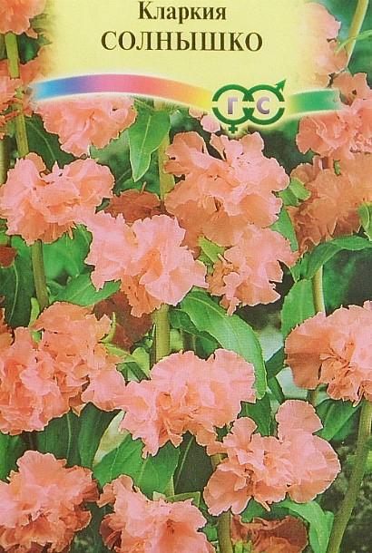 Кларкия, выращивание из семян