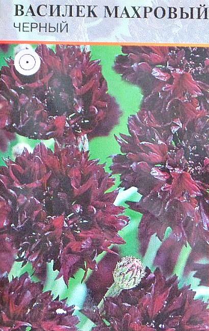 цветы васильки, выращивание - семена, сорт махровый, черный