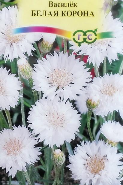 цветы васильки, выращивание - семена сорт белая корона