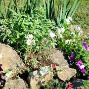 какие цветы посадить на даче 1-2