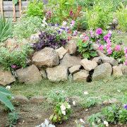 осенние цветы в саду, названия и фото 6