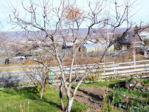 чем и когда опрыскивать плодовые деревья осенью