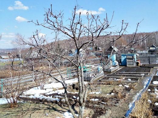чем и когда опрыскивать плодовые деревья весной