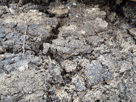 минеральные и органические удобрения для капусты - навоз