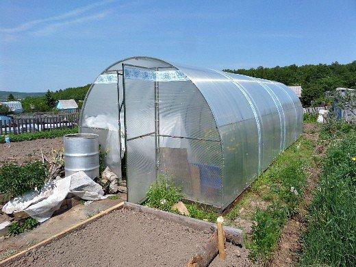 что посадить на огороде список - теплицу ставим поодаль от растений