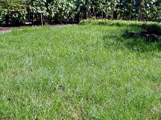 полив травы дачного газона, как и сколько раз
