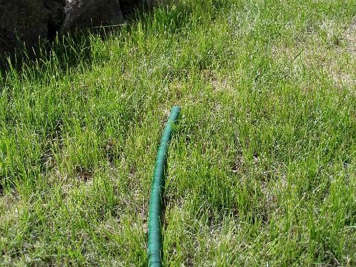 полив травы газона - шланг для воды