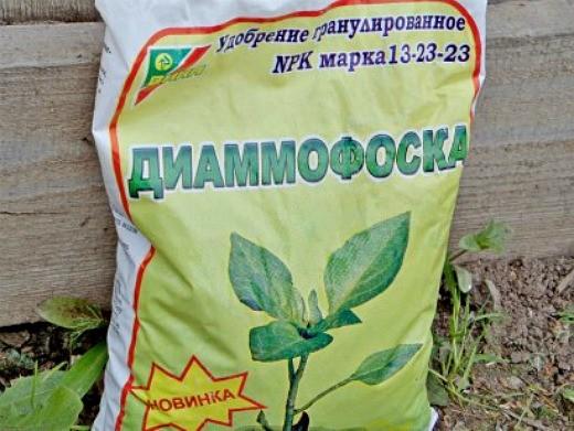 удобрения для петуний при выращивании - диаммофоска