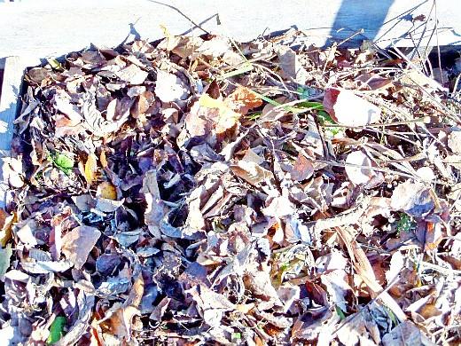 листья, как удобрение для растений в компостной куче