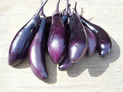 особенности выращивания овощей в северных районах - урожай баклажанов